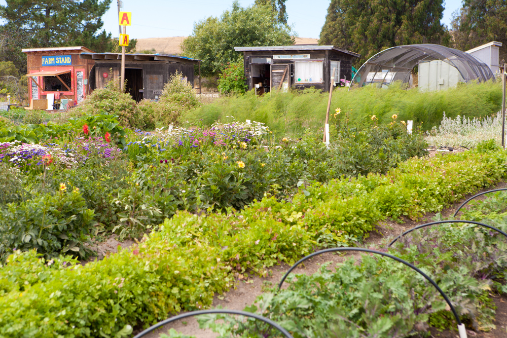 Homeless Garden Project: A Safe Place To Go | Farm Fork Life, by ...